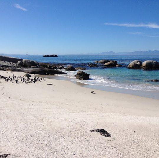 Boulders Beach Südafrika Pinguine