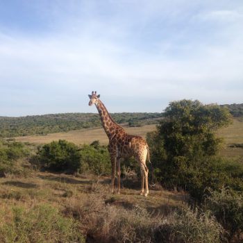 Safari Suedafrika Schotia Private Game Reserve